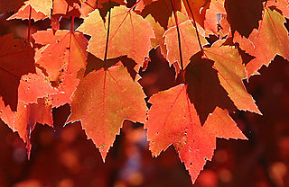 Fall_color